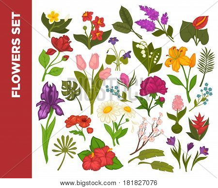 Fresh flowers colorful flat vector poster on white with dark red line and inscription on it. Blossoms with bright heads, green stems and leaves that grow in forests or in gardens gathered together