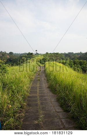 Grey stone path winding through tall grass with palm trees in distance. Ubud, Bali.