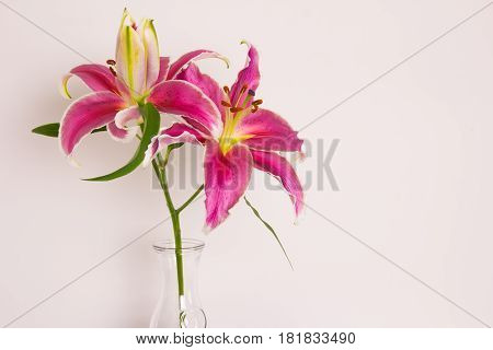 Close up of flower in a vase
