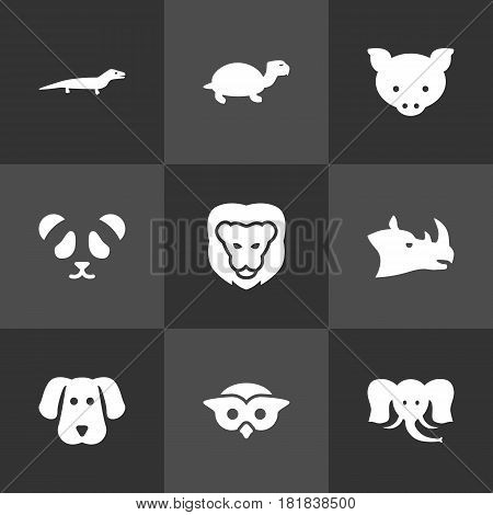 Set Of 9 Brute Icons Set.Collection Of King, Rhinoceros, Owl And Other Elements.