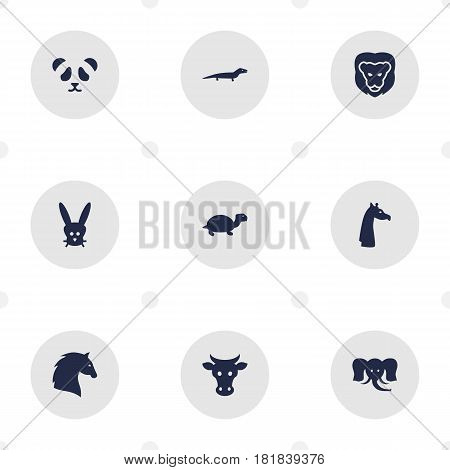 Set Of 9 Brute Icons Set.Collection Of Camelopard, Tortoise, Steed And Other Elements.