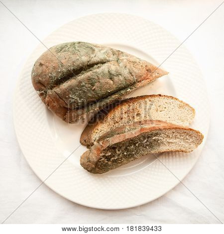Spoiled cut loaf covered with green mold isolated. Beautiful old moldy bread sliced on a white plate. Expired bakery food