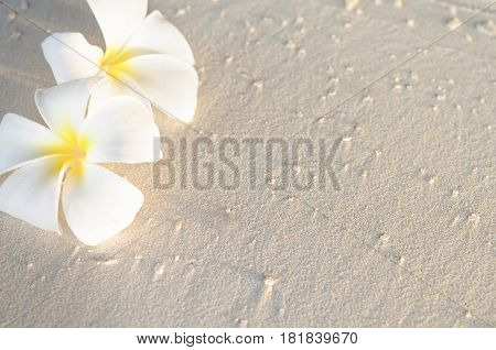 Two plumeria flowers on sunset sand beach with copy space Maldives