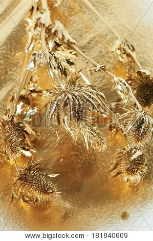 Thorn eryngium , painted with gold paint. Gold, beauty, luxury. Wealth is pricked, the dangers of luxury