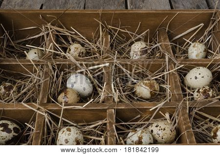 Quail eggs in the hay in an old wooden box