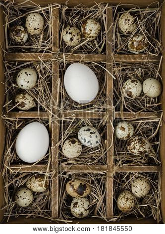 Wooden box lined with hay with cells which are quail and chicken eggs