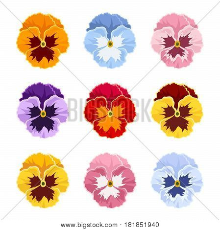 Set of colorful pansy flowers isolate on a white background.