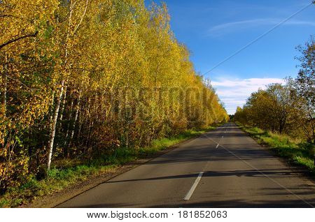 On the sides of the asphalt road there are trees with yellow leaves
