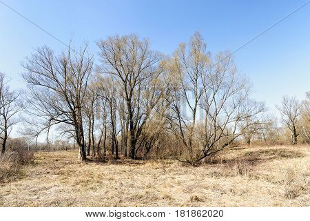 Hay And Trees In The Ukrainian Meadow