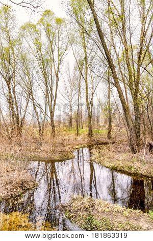 Creek, Hay And Tree