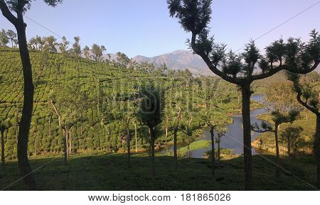 Picturesque tea gardens maintained in high altitude