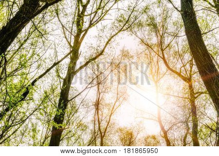 Forest And Sky With Sun