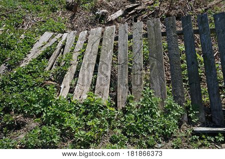Old wooden fence toppled outdoors in summer day