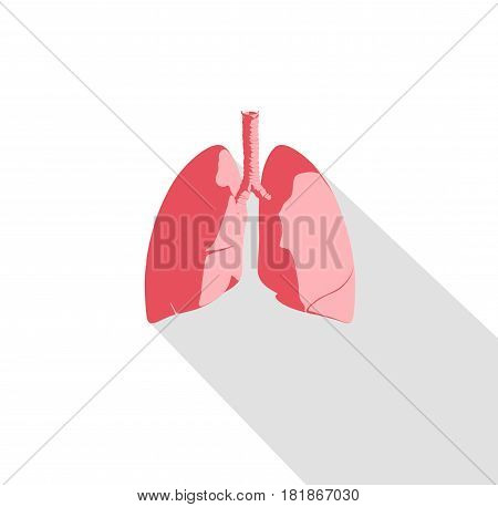 Lungs infographic. Anatomical icon of lungs on white background. Illustration.