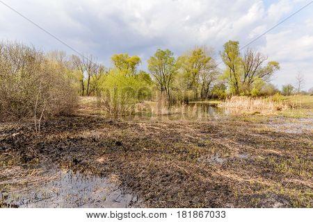 Lake, Burnt Land And Tree