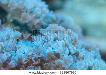 Living corals are very close underwater world