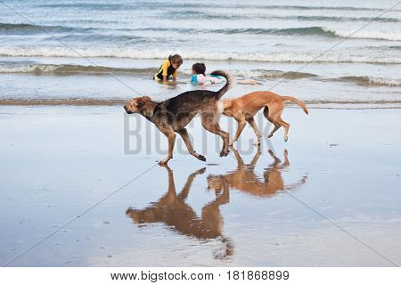 Kids and Dogs Playing in the Ocean