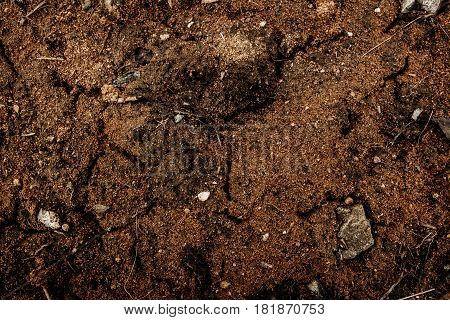 Soil, red soil, soil background, soil texture. Nature background. Soil closeup.Clay soil. Red soil.