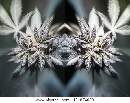 Marijuana plant  Art Stock Photo High Quality