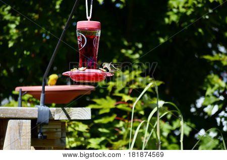 Glass bottle Hummingbird feeder on a sunny summer day