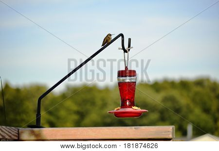 Glass bottle Hummingbird feeder filled with nectar food on a sunny summer day and hummingbird resting
