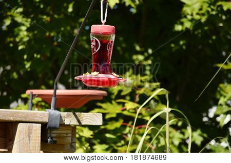 Glass bottle Hummingbird feeder filled with nectar food on a sunny summer day