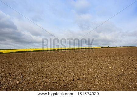 Oilseed Rape Crop And Plowed Soil