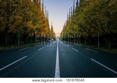 Empty Road In City With Trees In Autum