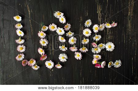 Word love written with daisy flowers on dark background