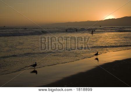 Birds And A Beautiful Sunset