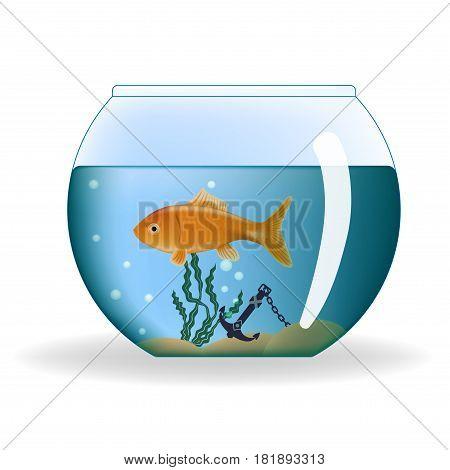 Goldfish in round aquarium on a white background