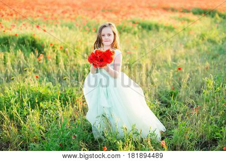 girl model, poppies, childhood, fashion, nature and summer concept - cute little model in pale blue ball dress stay over a field of red poppies with a smile, holding the bouquet of fresh flowers