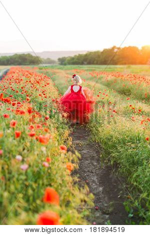 poppies, agriculture, production and ecology, nature and summer concept - the garden beds with blooming red poppies little girl running blonde in red holiday dress, in her hair the flowers of poppies