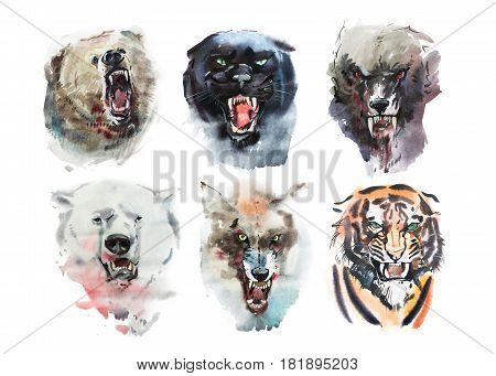 Watercolor drawing animal portraits on white background