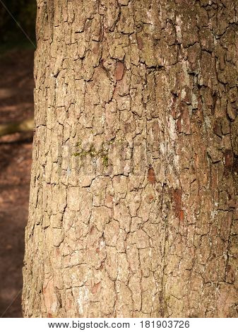 The Brown And Cracked Texture Of Tree Bark Up Close