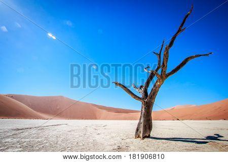 Dead Tree In Sossusvlei Desert.