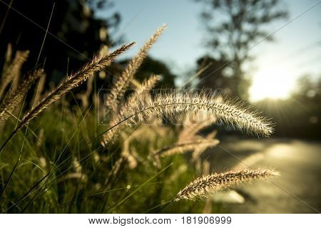 Grass with Sunlight on Countryside Suburban