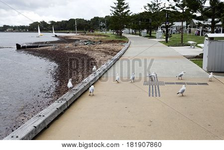 View of Woody Point foreshore in the southern end of the Redcliffe Peninsula Queensland Australia