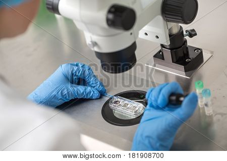 Doctor in blue gloves does control check of the in vitro fertilization process using a microscope. Closeup. Horizontal.