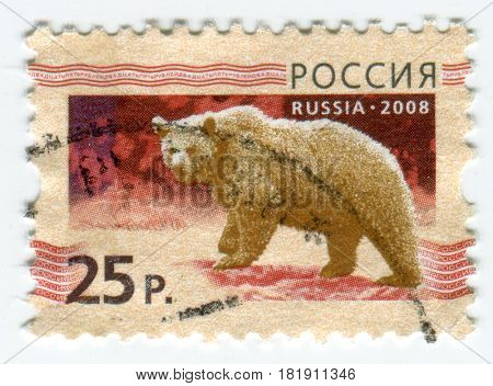 GOMEL, BELARUS, APRIL 15, 2017. Stamp printed in Russia shows image of  The Bears are carnivoran mammals of the family Ursidae, circa 2008.