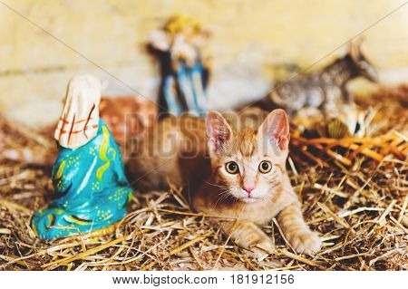 Cute little red kitten playing in old church between figurines of Jesus and Mary