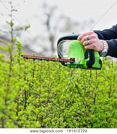 Trimming a Hedge with Electric Hedge Trimmer.