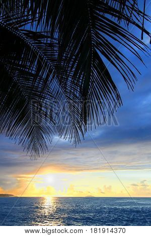 Sunset Palms on the Caribbean Island of Puerto Rico