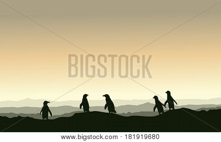 Collection stock penguin landscape on hill vector illustration