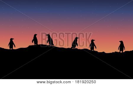 Lined penguin scenery at night vector illustration