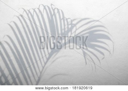 abstract background of shadows palm leaves on white concrete rough texture