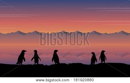 Beauty scenery penguin silhouette style vector illustration
