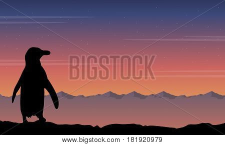 Background penguin silhouette beauty landscape collection stock