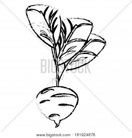 beet food diet healthy sketch vector illsutration eps 10