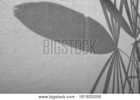 abstract background of shadow palm leaves on concrete rough texture wall. White and Black